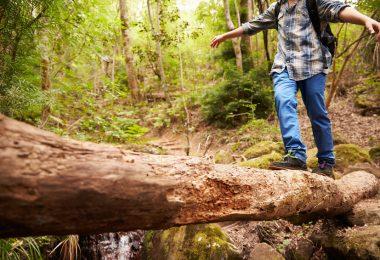 nature-jungle-walking