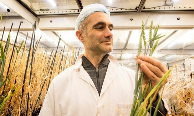 دانشمندان با توجه به رشد جمعیت، به دنبال راهی برای افزایش سرعت رشد گیاهان هستند