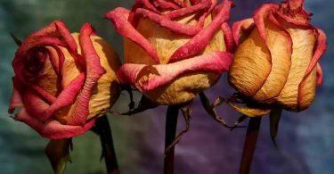 بهترین راه برای خشک کردن گل طبیعی